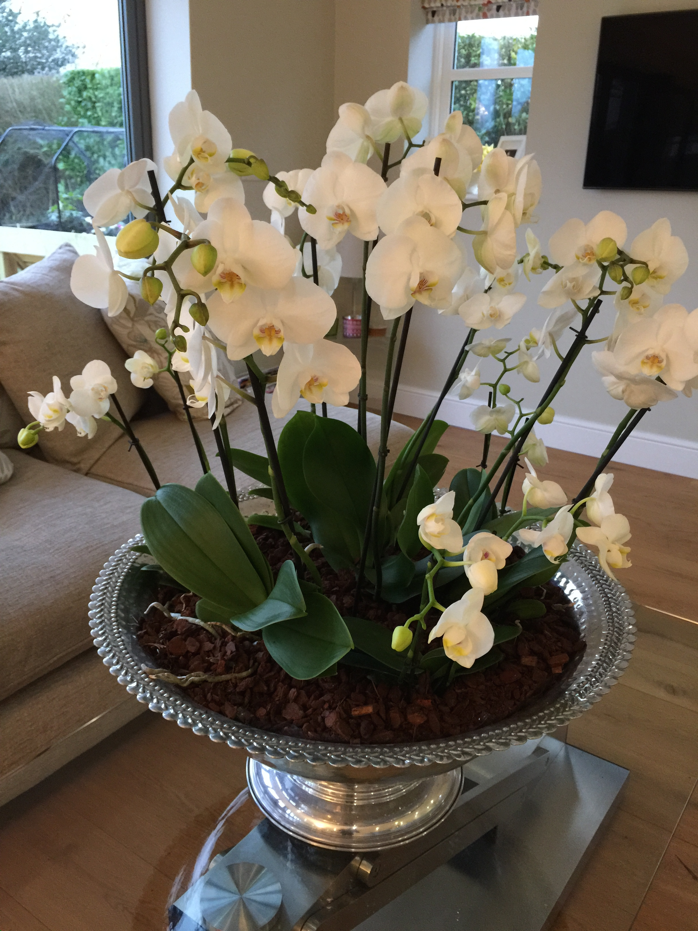 Planted Orchids