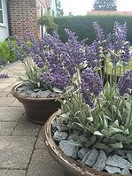 lavender, grey slate