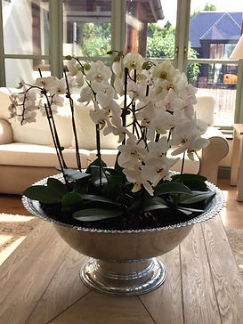 Phalenopsis, white orchids, planted bowl