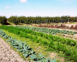 azienda agricola 3