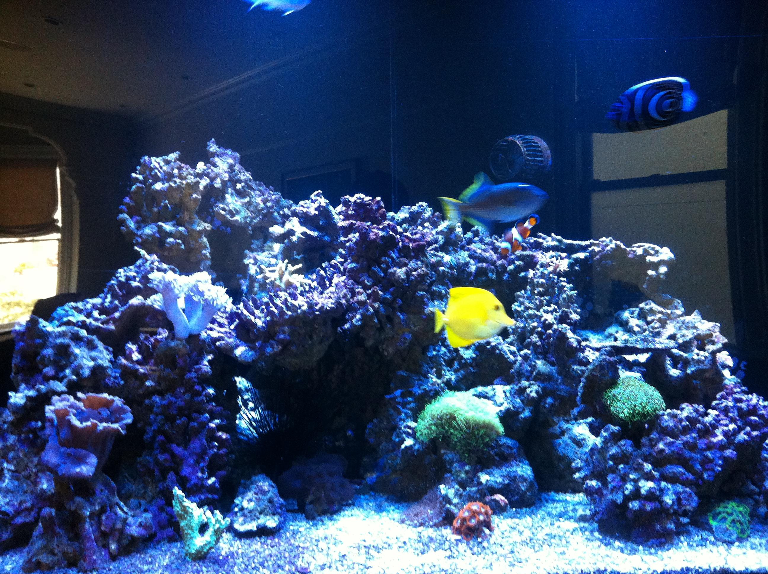Custom Fish Tanks & Aquascaping | Bay Area Aquarium