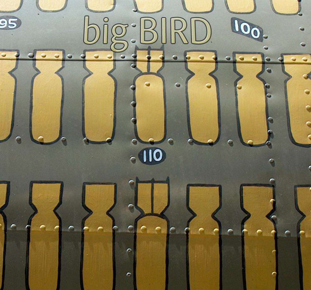 BIG-BIRD-002-1000.jpg