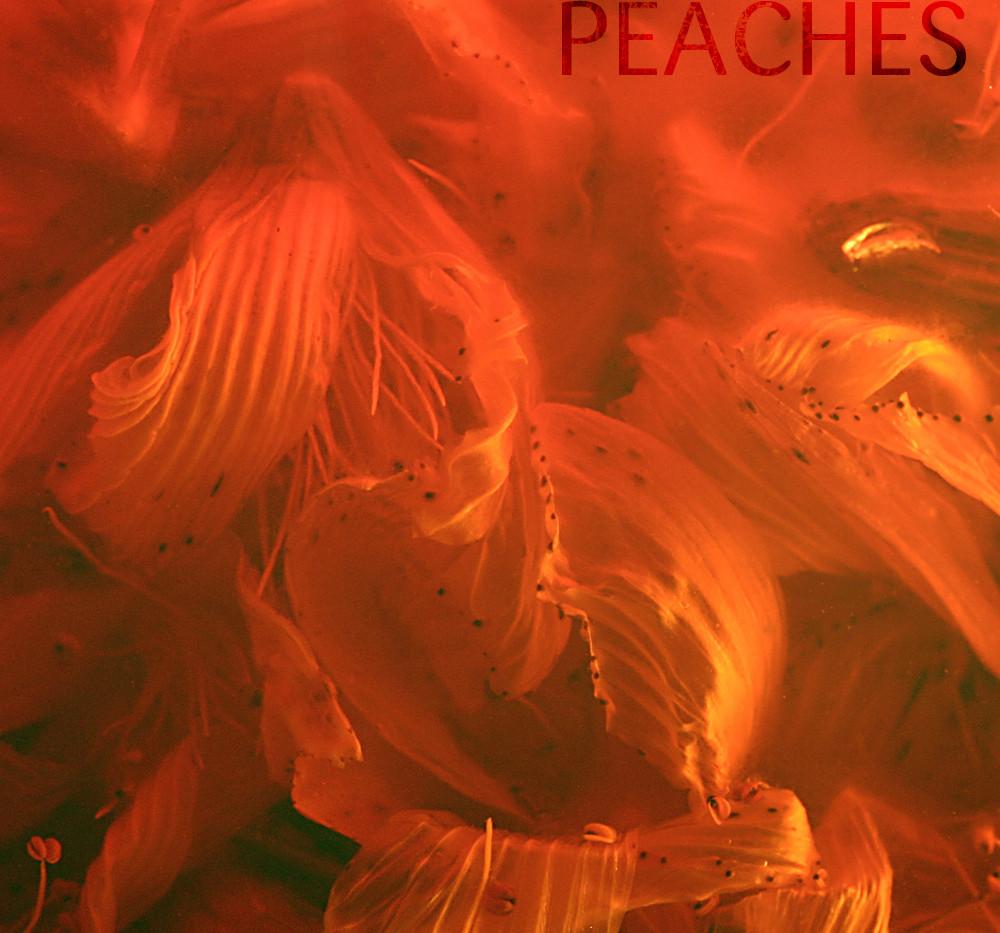 PEACHES-002-1000.jpg