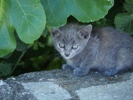 Kitten, Kerkini