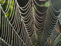 Webs and dew, near Angers