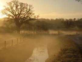 Misty morning, Rockhampton