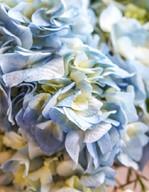 COMP blue flower_edited_edited.jpg