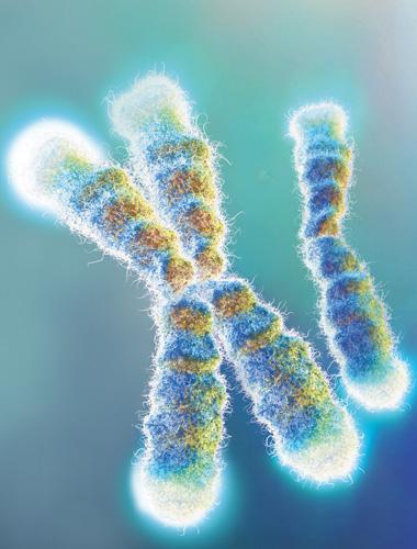 Telomeres in Disease