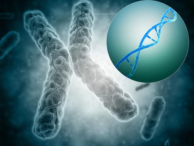 Telomerek titkai