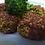 Thumbnail: Hodmedods British Little Green Lentils (500g)