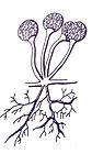 micro_vegetal.jpg