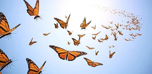 envol-du-papillon-1020x500.jpg