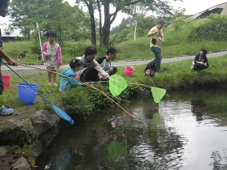 観光協会主催のウチダザリガニ釣り大会