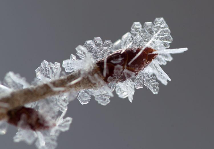 """""""樹氷、結晶"""""""