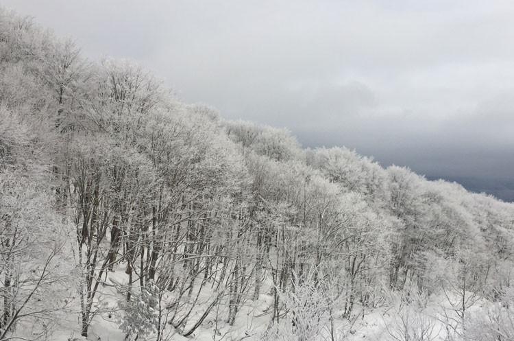 """""""雪景色"""""""