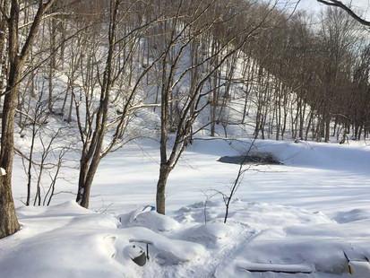 2月の裏庭