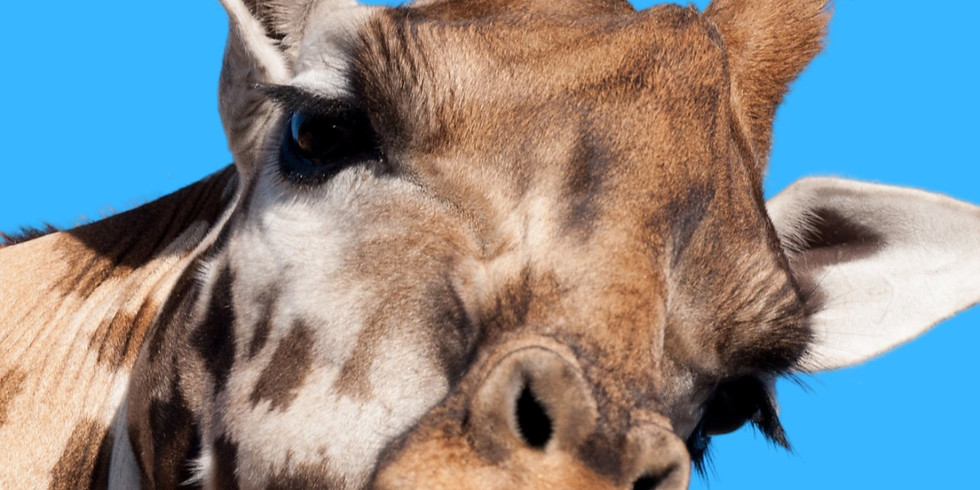 School's Out Bash - Indian Creek Zoo