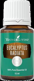 Eucalyptus Radiata ätherisches Öl Aschach an der Donau Young Living