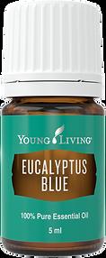 Eucalyptus Blue Ätherisches Öl Aschach an der Donau Young Living