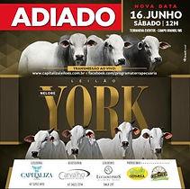 16-06_-_LEILÃO_NELORE_YORK_-_TERRA_NOVA