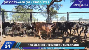 Lote 24