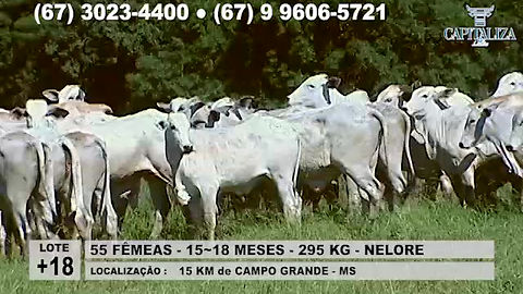 Lote +1R