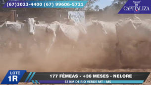 Lote 1R