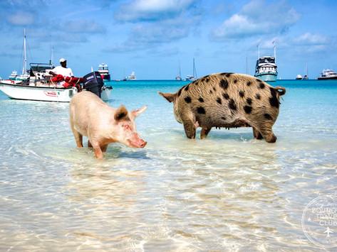 Exuma Bahamas Top 10 Must Do