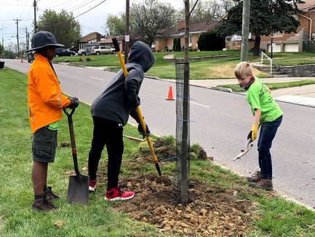 Eagle Scout Project Beautifies Westwood Northern Boulevard