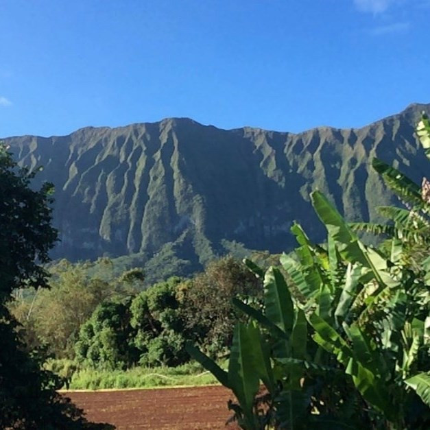 5 Business Lessons I Learned Growing Up on a Farm in Hawaii