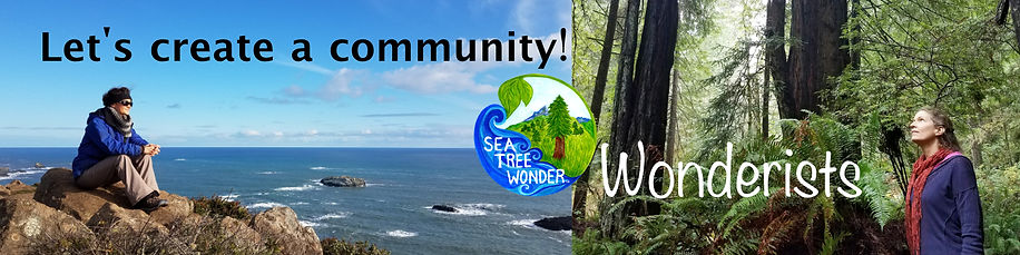 Sea Tree Wonder Patreon Banner July 2020
