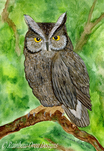 reduced Owl Forest Serenity 4.5x6.5 rati