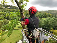 One of the tree rangers in action
