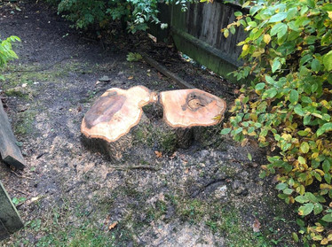 Stump grinding in tree surgery in Oxted