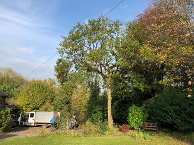 A Tree Surgery job in Woldingham