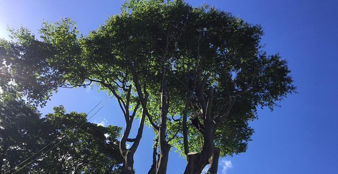 Another great job from Treerangers in Kent