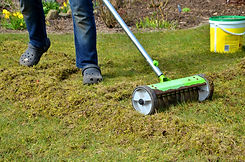 remove-moss-from-lawn.jpg
