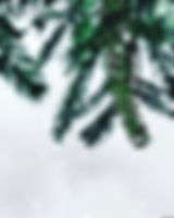 selective-color-photography-of-pine-leaf