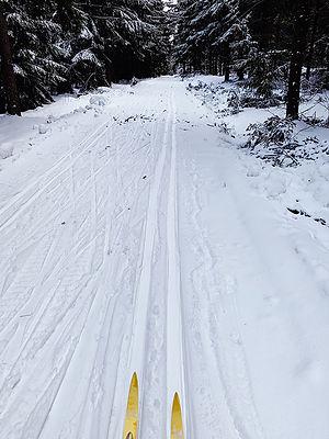 nordic-skiing-coaching.jpg