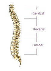 SPINE PAIN CATEGORIES.png
