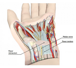 Carpal Tunnel Syndrome Treatment.png