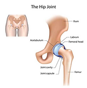HIP-JOINT.png