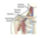 thoracic outlet syndrome treatment.png