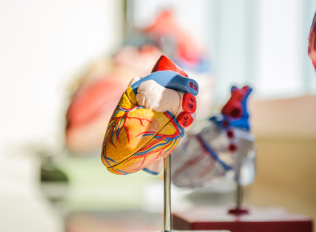 Why Amino Acids Can Help With Your Heart Health
