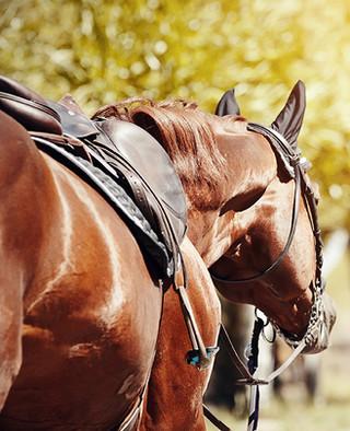 horse back riding at pentalago