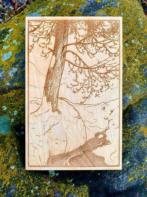 'Cedars Grace' - Engraved Illustration on Birch