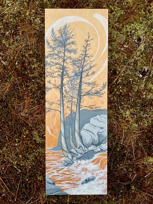 'Transition' - on Birch