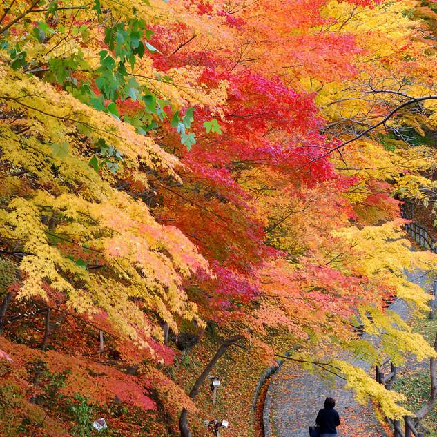 Tsuriyama Park