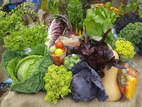 Ichinoseki's 'western veggie' project