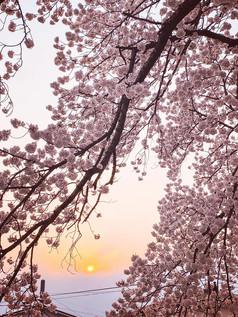 Tsurisaku1.jpg